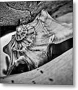 Conch Shell Two Metal Print