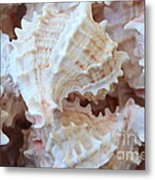 Conches Metal Print