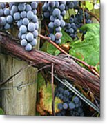 Concord Purple Metal Print by Wendy Raatz Photography