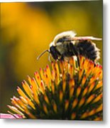 Cone Flower And Bee Metal Print