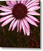 Coneflower And Dusty Miller Hdr Metal Print