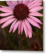 Coneflower And Dusty Miller Metal Print
