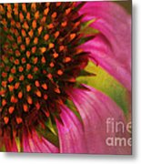Coneflower Metal Print by Darren Fisher