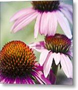 Coneflower Jewel Tones - Echinacea Metal Print