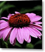 Coneflower With Bug Metal Print