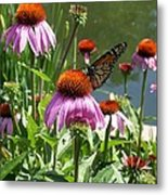 Coneflower With Butterfly Metal Print