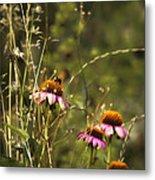 Coneflowers Weeds And Bee Metal Print