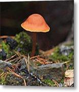 Conical Wax Cap Mushroom Metal Print