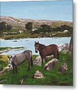 Connemara Ponies Metal Print