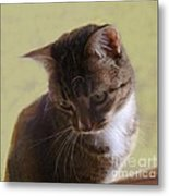Contemplating A Pounce Metal Print by Diana Besser