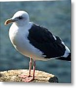 Contemplating Life Of A Sea Gull Metal Print