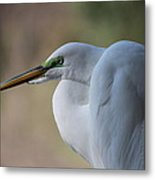 Contemplation Of Great Egret Metal Print