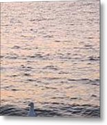 Contemplative Seagull Metal Print