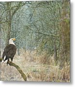 Content And Curious Metal Print