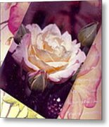 Continuation From Print To Photo Of White Rose Metal Print