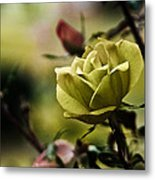 Contrasting Beauty Metal Print