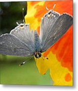 Contrasting Butterfly Metal Print