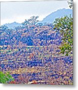 Controlled Burn Area In Kruger National Park-south Africa Metal Print