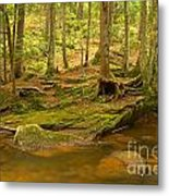 Cook Forest Rocks And Roots Metal Print