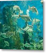 Cool Aquarium Metal Print by Ray Warren