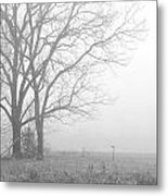 Cool Damp Foggy Metal Print