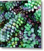Cool Hued Burro's Tails In The Hot Desert Metal Print
