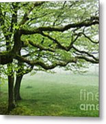 Cool Misty Day At Blackbury Camp Metal Print