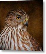 Coopers Hawk Portrait 2 Metal Print