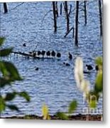 Coots On A Tree Metal Print