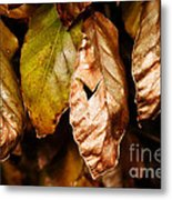 Copper Beech Leaves Metal Print