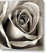 Copper Rose Metal Print