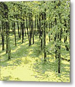 Copse Of Trees Sunlight Metal Print