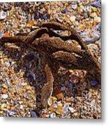 Coral Beach Treasure  Metal Print