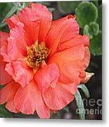 Coral Desert Rose Metal Print