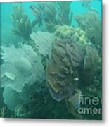 Coral Fans Metal Print by Adam Jewell