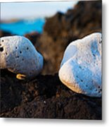 Coral Friends Metal Print
