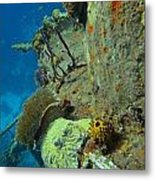 Coral Growth On A Ship Wreck Metal Print