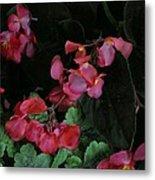 Coral Petals Metal Print