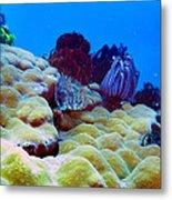 Corals Underwater Metal Print