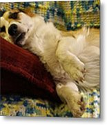 Corgi Asleep On The Pillow Metal Print