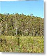 Corkscrew Swamp 1 Metal Print