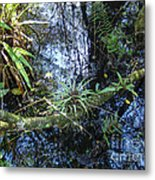 Corkscrew Swamp 16 Metal Print