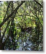 Corkscrew Swamp 3 Metal Print