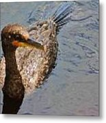 Cormorant After A Swim Metal Print
