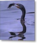 Cormorant Catch Reflection Beauty Metal Print
