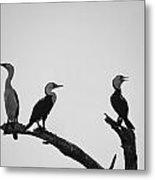 Cormorants-black And White Metal Print
