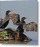 Cormorants Sunbathing Metal Print