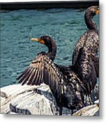 Cormorants Metal Print