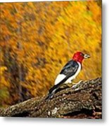 Corn Fed Woodpecker Metal Print