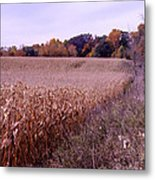 Corn Field In The Fall Metal Print